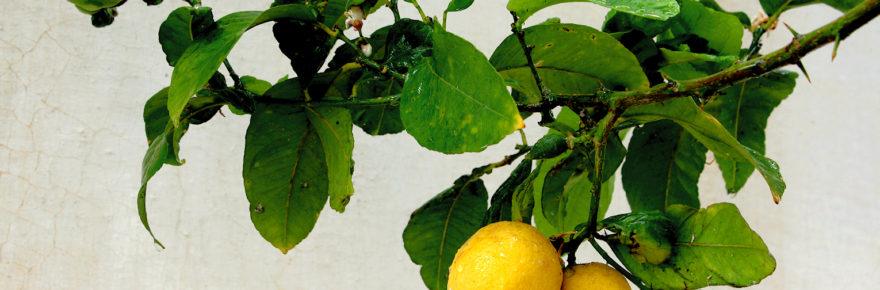 Wasserkocher entkalken mit Zitronen
